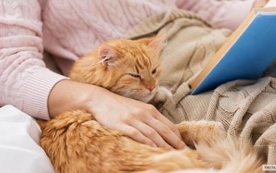 """Cfarë nënkupton lëvizja e bërjes së """"brumit"""" për macet?"""